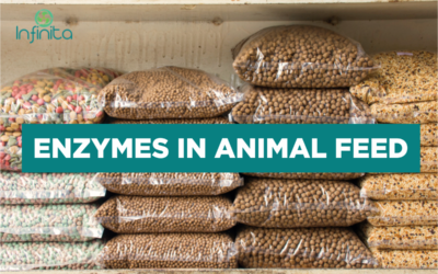 Enzymes in Animal Feed: Benefits And Future Uses
