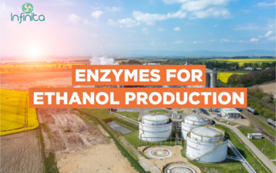 What Is Ethanol And How Is It Made?