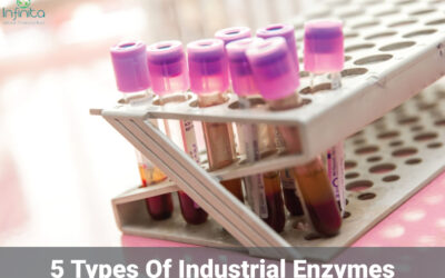 5 Types of Industrial Enzymes