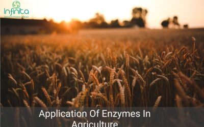 Application Of Enzymes In Agriculture