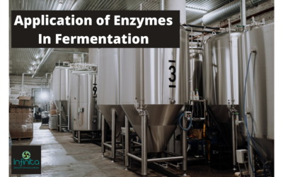 Application Of Enzymes In Fermentation