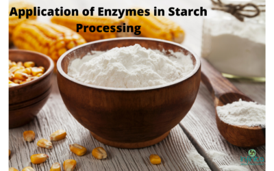 Application Of Enzymes In Starch Processing