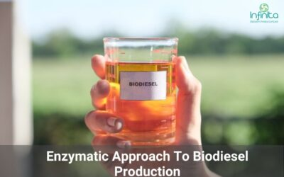 Enzymatic Approach To Biodiesel Production