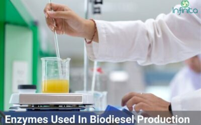 Which Enzymes Are Used In Biodiesel Production?
