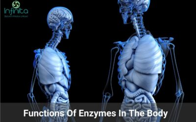 Functions Of Enzymes In The Body