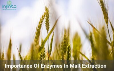 Why Enzymes Are Important In Malt Extraction