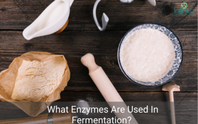What Enzymes Are Used In Fermentation?