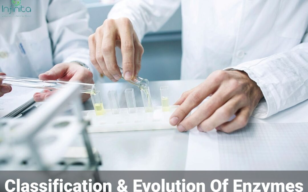 What are Enzymes? Classification and Evolution of Enzymes