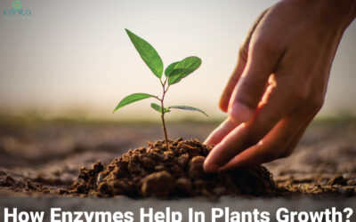 3 Best Enzymes For Plants Growth