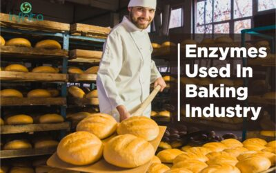 Enzymes Used In Baking Industry