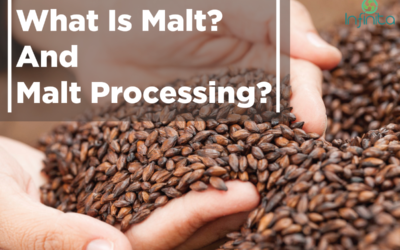 What Is Malt? And Malt Processing?