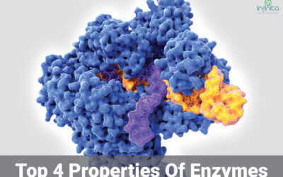 What Are The Properties Of Enzymes?