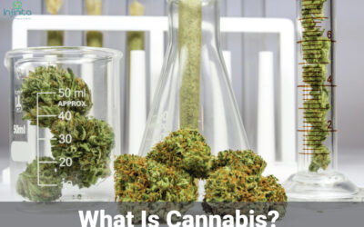 What Is Cannabis? How Do Enzymes Help Cannabis?