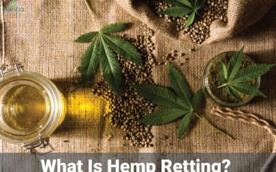What Is Hemp Retting? Which Enzymes Are Used For Hemp Retting?