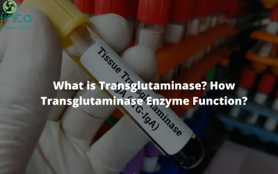 What is Transglutaminase? How does the Transglutaminase Enzyme Function?